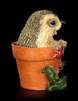 Funny Hedgehog Figurine in Flowerpot - Kuckuck