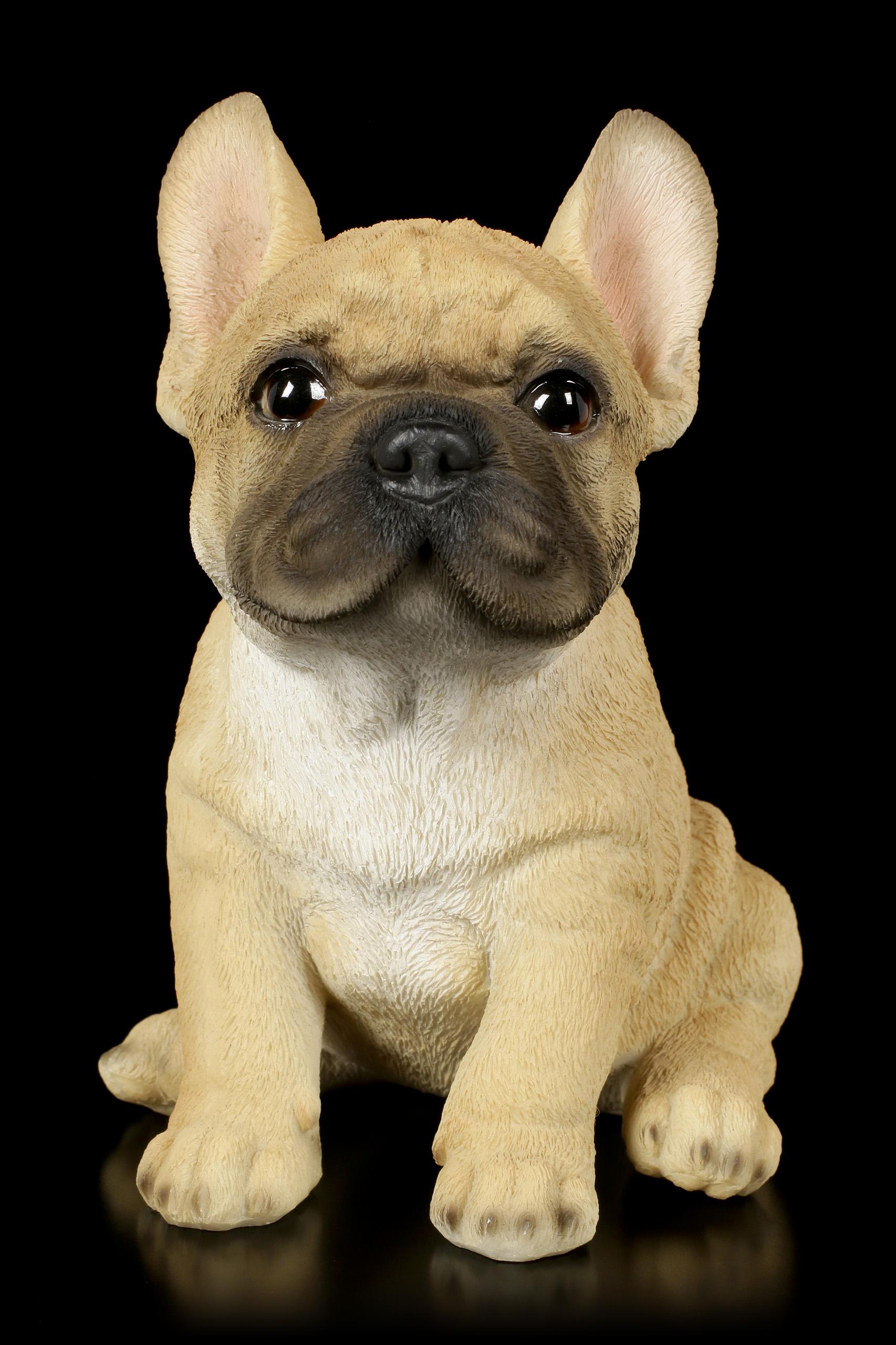 Französiche Bulldoge