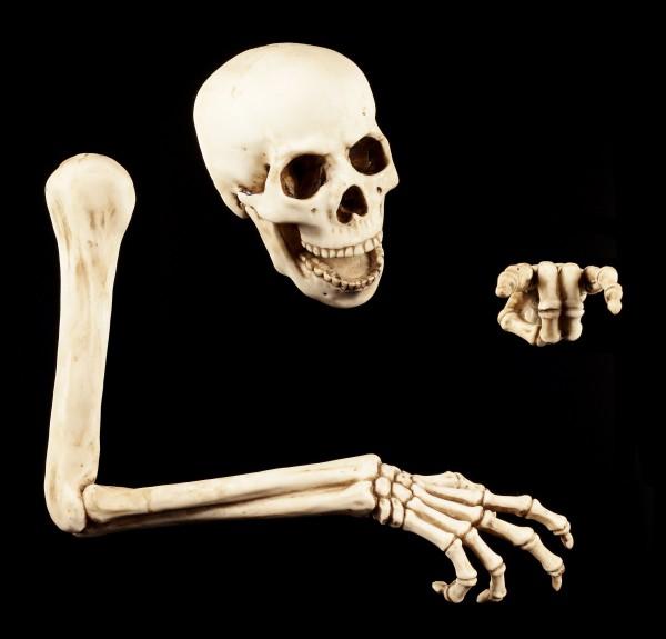 Skelett Wanddeko 3tlg. by Markus Mayer