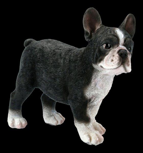 Hunde Figur - Französische Bulldogge Welpe