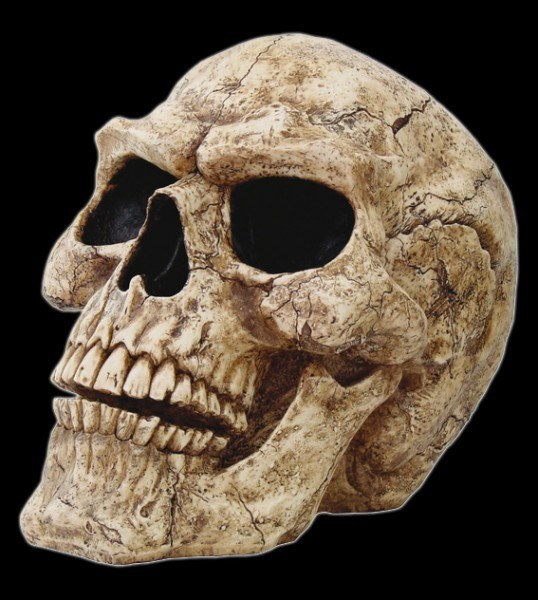 Large Outdoor Skull