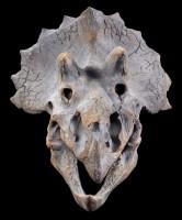 Wandrelief - Dinosaurier Kopf - Triceratops