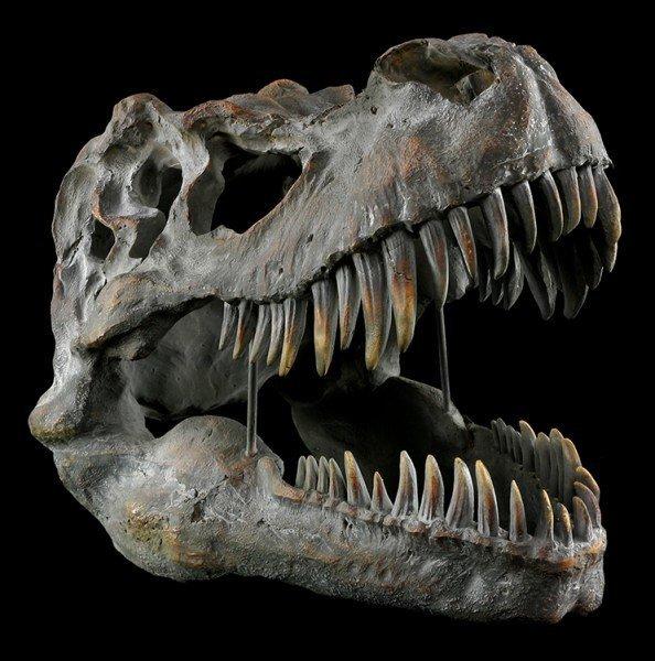 Tyrannosaurus Rex Skull - large