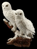 Snow Owl Couple on Tree Branch