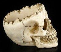 Totenkopf Lobo ohne Schädeldecke
