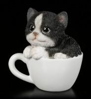 Schwarz-Weißes Kätzchen in Tasse - klein