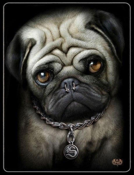 Fleecedecke Mops - Pug Life
