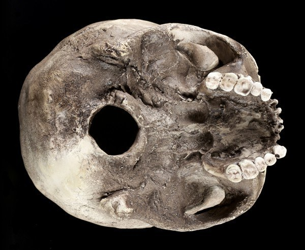 Famale Skull Replica - Sagus Human Cranium - Dark