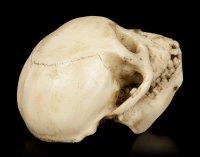 Affen Totenkopf mit beweglichem Unterkiefer