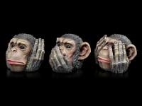 Chimpanzee Heads - No Evil