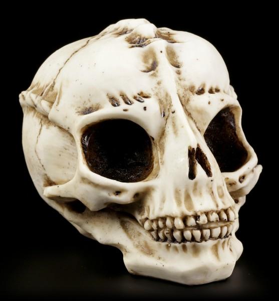 Alien Skull - The Visitor - Bone color