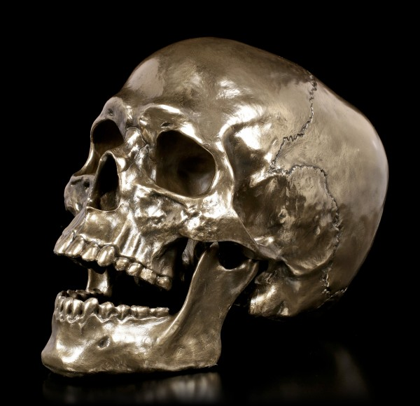 Skull with movable Jaw - Cranius