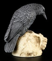Raven sitting on Skull