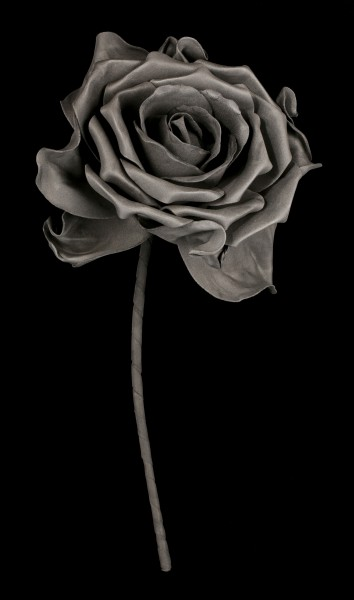 Black Rose with Stem