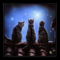Kleines Hochglanz Bild mit Katzen - Wish Upon a Star