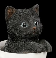 Black Kitty in Cup