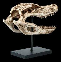 Alligator Skull on Metal Stand