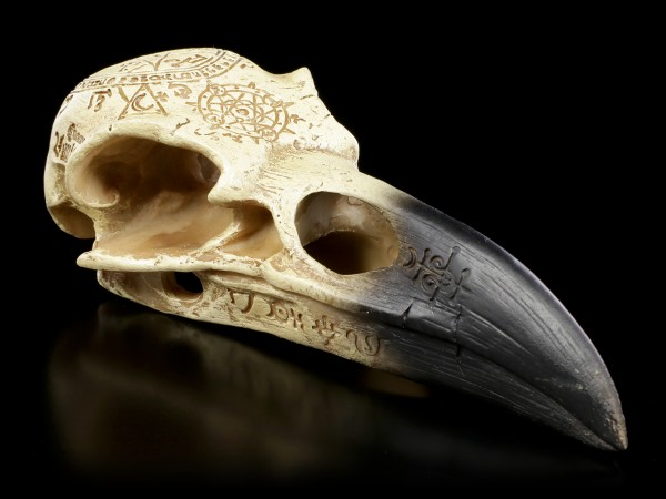Alchemy Raven Skull - Omega