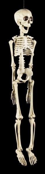 Kunststoff Skelett 50 cm