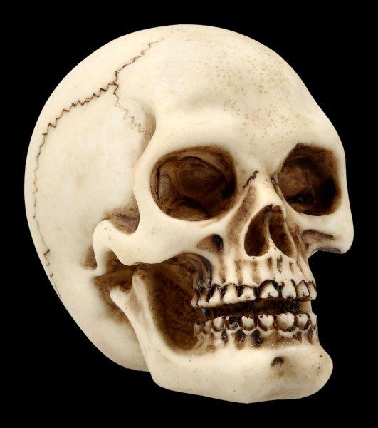 Menschlicher Totenkopf mit Unterkiefer - klein