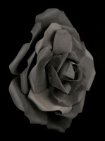 Black Rose Head large