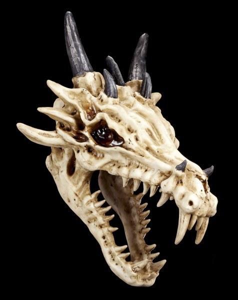 Drachen Skelett Schädel - Die Legende
