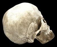 Totenkopf Replikat Frau - Sagus mit Unterkiefer
