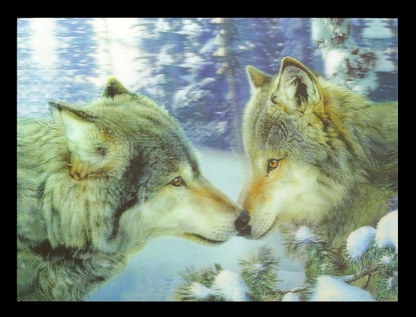 3D-Bild mit Wölfen - Muzzle Nuzzle