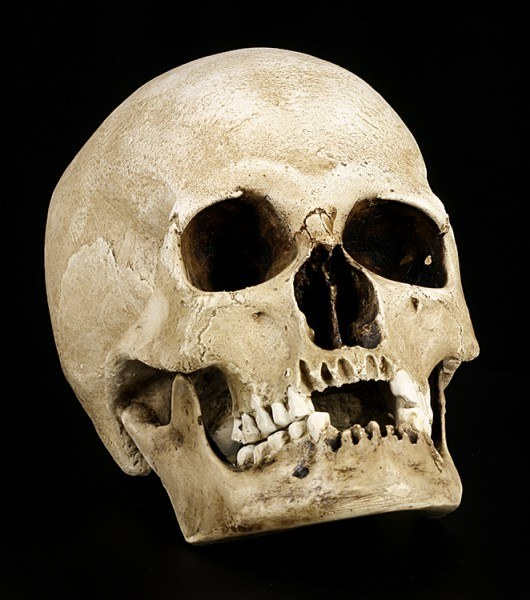 Human Female Skull Replica with Jaw - Sagus