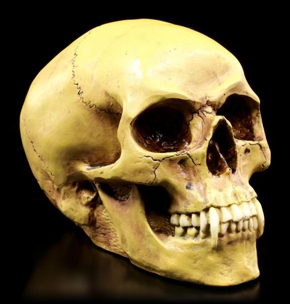 Totenkopf - Vampirschädel