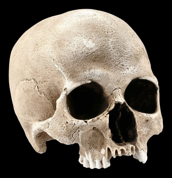 Human Female Skull Replica - Sagus