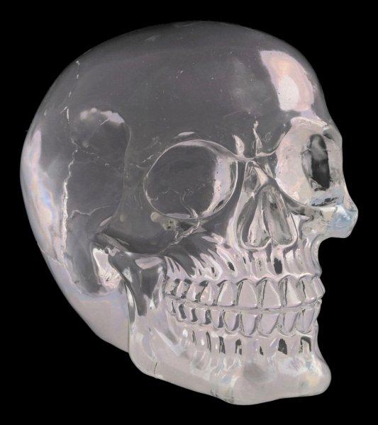 Skull - translucent