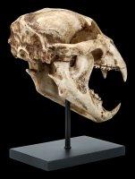 Black Bear Skull on Metal Stand