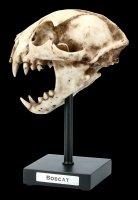 Bob Cat Skull on Metal Stand