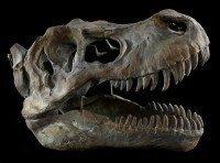 Totenkopf - Tyrannosaurus Rex - mittel