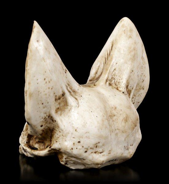 Fledermaus Totenkopf - Vespertilio