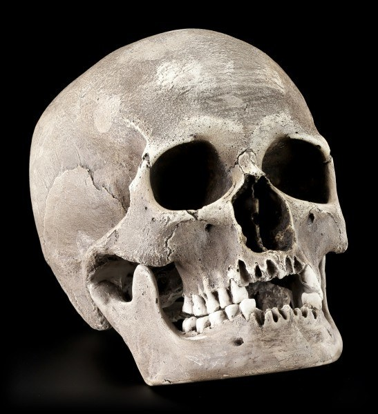 Famale Skull Replica - Sagus with Mandible - Dark
