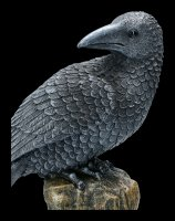 Black Raven sitting on Rock