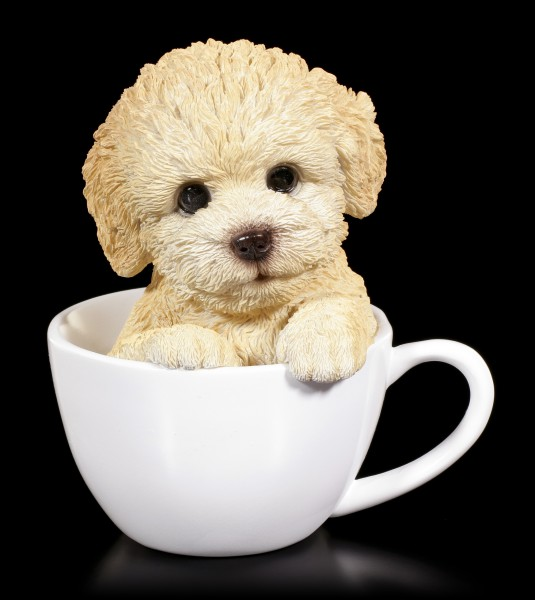 Dog in Cup - Poodle Puppy