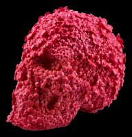 Skull with Flowers - Fuschia Fate