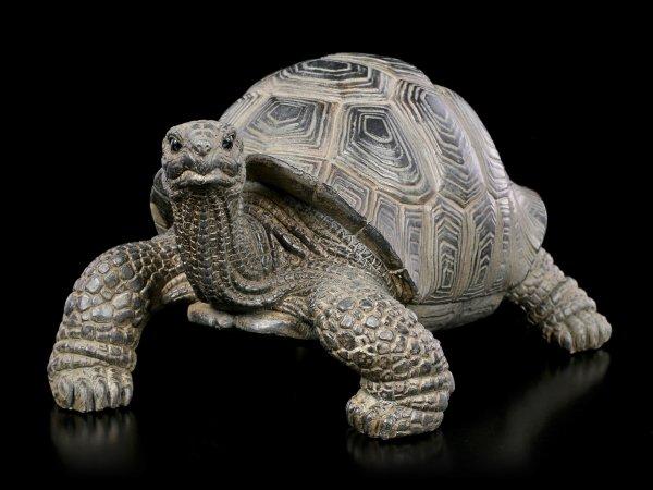 Land-Schildkröten Figur - klein