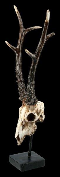 Roebuck Skull on Metal Stand