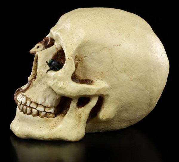 Totenschädel Spardose Totenkopf