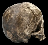 Male Skull Replica - Ragna Human Cranium - Dark