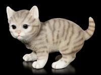 Baby Katzen Figur - Amerikanisch Kurzhaar spielend