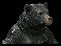 Bottle Holder - Black Bear
