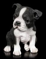 Hunde Welpen Figur - Boston Terrier