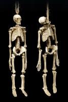 Skelett Figuren zum Hängen - 2er Set