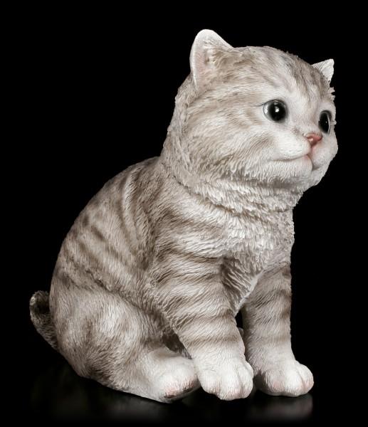 Baby Cat Figurine - American Shorthair sitting