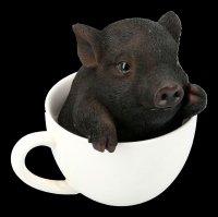 Black Pig in Cup